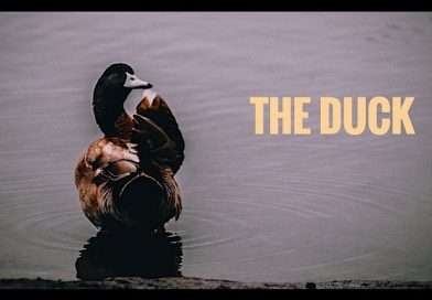 The Duck Short Period Piece Comedy