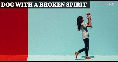 Dog with a Broken Spirit
