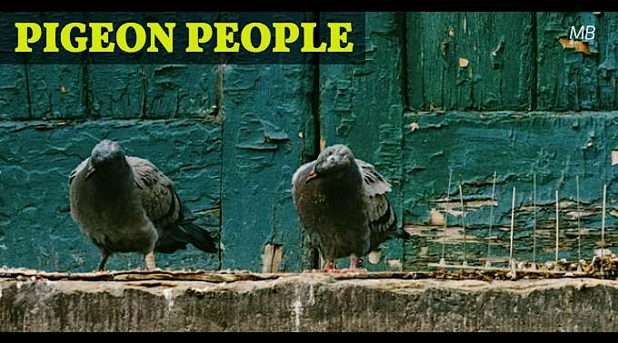 Pigeon People Comedic Short Script